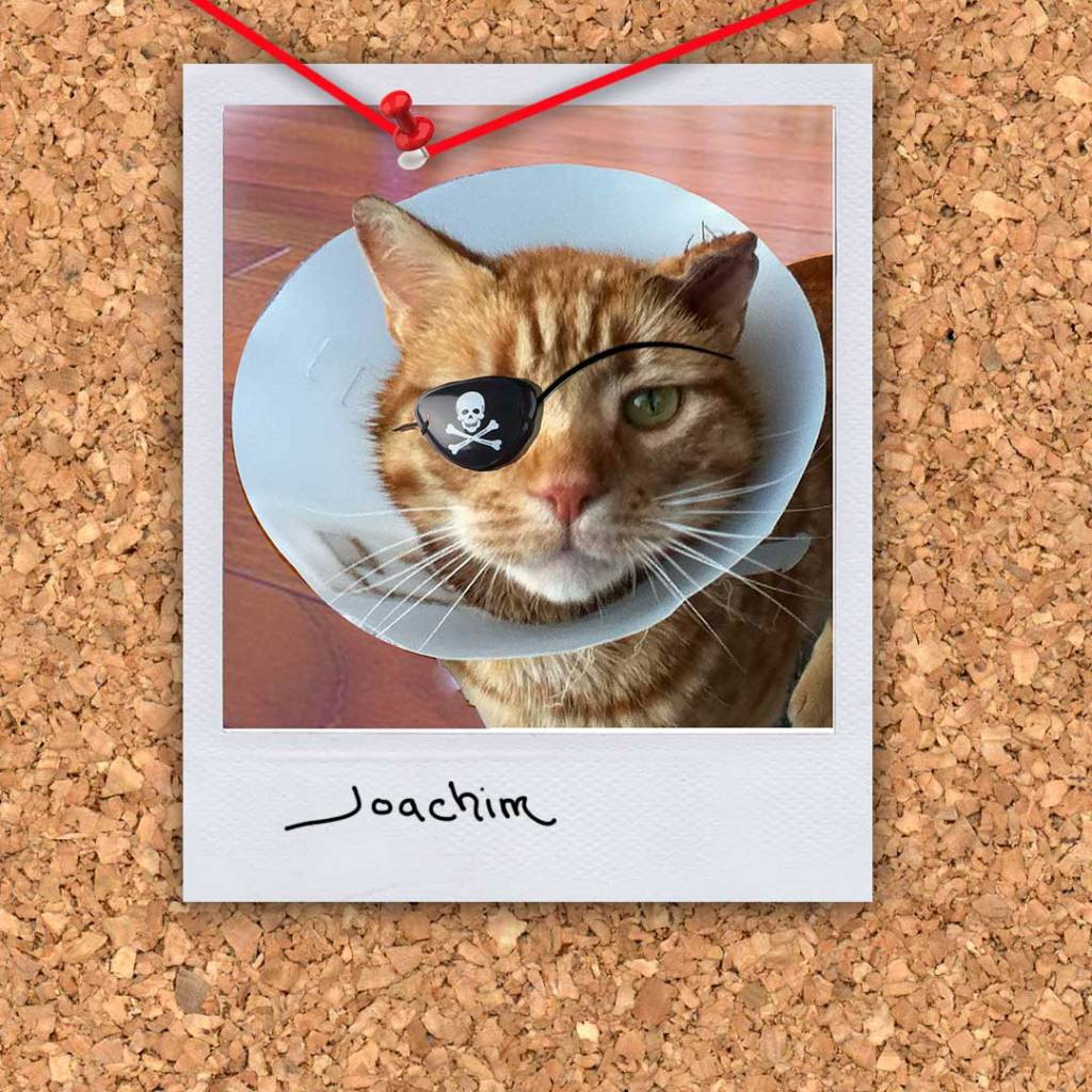 """Joachim the cat from the novel """"Morningwood"""" by Perry V Wade."""